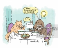 Cartoon of a dog and cat eating at a restaurant and the dog complains about finding a hair in his soup.