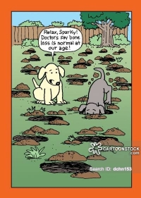 A dog watches his pal dig up a yard in search of a buried bone.