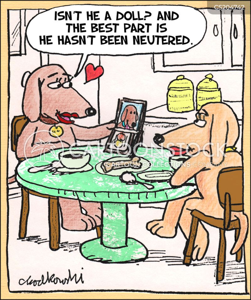 Cartoon of two female dogs sitting at the kitchen table, having coffee. One is telling the other about the best part of the new male in her life.