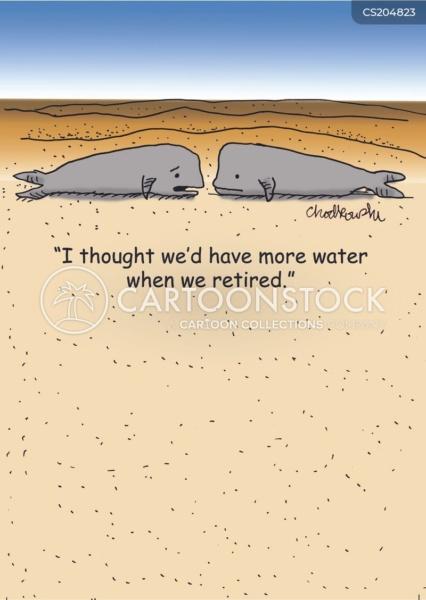 """Two whales facing each other basking in sand with no ocean in sight. One says,"""" I thought we'd have more water when we retired."""""""