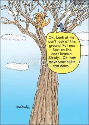 A cat is way up in a tree and scared to move. A bird is on a nearby branch coaching him on how to get down.