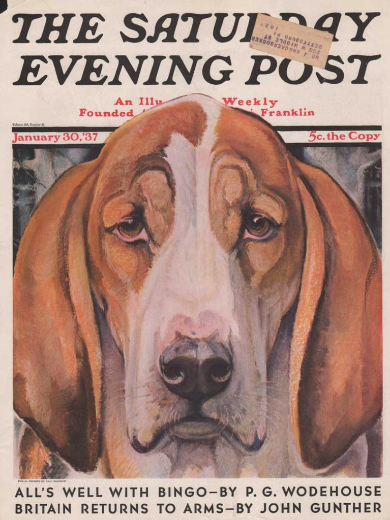 Cover of January 30, 1937 of the Saturday Evening Post. Bassett Hound's closeup of face. Illustrated by Paul Bransom.