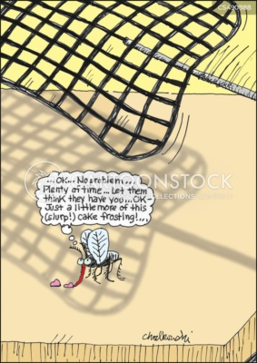 Cartoon of a fly or mosquito nibbling a drop of cake frosting when he sees a fly swatter headed his way. Nonetheless, he knows he has time for another slurp of the sweet treat and still have time to escape.
