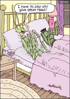 Praying mantises in bed. The female is asking her partner if it was as good for him as it was for her. The male is missing his head, Female praying mantises sometimes bite their partner's head off after sex.